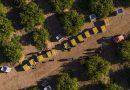 El sector del limón, aliado contra el cambio  climático, captura cada año más de 360.500  toneladas de CO2