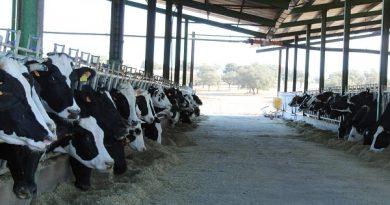 Alarma en el vacuno lácteo ante la progresiva pérdida de rentabilidad y los bajos precios en origen