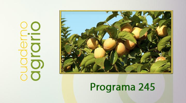 Cuaderno Agrario PGM 245
