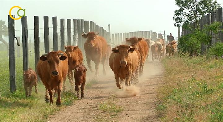 UPA: «La agricultura y la ganadería sostenibles reivindican su capacidad de hacer frente al cambio climático»