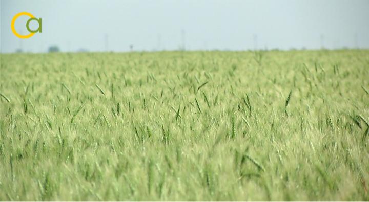 El Ministerio de Agricultura prorroga hasta el 15 de mayo el plazo de presentación de la solicitud única de ayudas de la PAC 2021