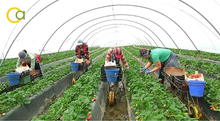 El Gobierno aprueba medidas urgentes para favorecer la contratación temporal de trabajadores en el sector agrario