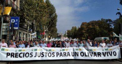 El sector olivarero llama el día 30 de enero a paralizar la provincia por la crisis de bajos precios en origen del aceite de oliva