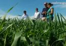 VÍDEO: El Ifapa optimiza los cultivos extensivos de secano